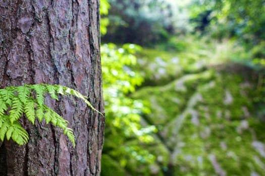 La forêt des Landes à Vielle-saint-Girons